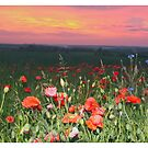 Lullaby for Piano Solo and Poppies. Johannes Brahms. facit. Brown Sugar.Favorites: 1 Views: 305 Thx! by © Andrzej Goszcz,M.D. Ph.D