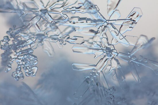 A tangle of snow flakes by intensivelight