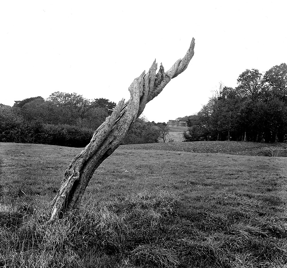 Tree Stump, Phoenix Park, Dublin by Dave  Kennedy