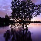 Como Tree by Rod Kashubin