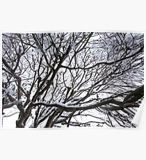 Lace Leaf Maple Poster