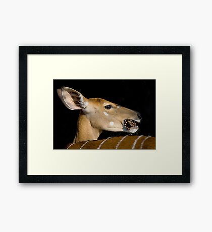 Don't Talk With Your Mouth Full ! Framed Print