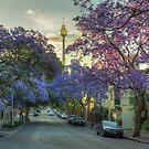 Jacarandas in Bloom by Rod Kashubin
