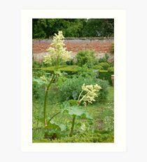 A suffolk garden Art Print