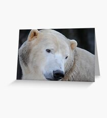 Polarbear Greeting Card