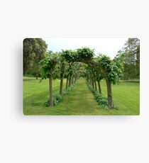 Trees form an archway. Canvas Print