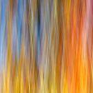 Fall impression 432 - 2010 by Joseph Rotindo