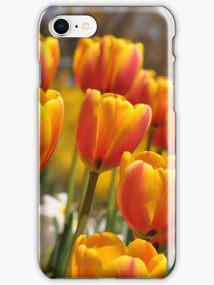Red and Yellow Tulips  iphone case by Elaine Manley