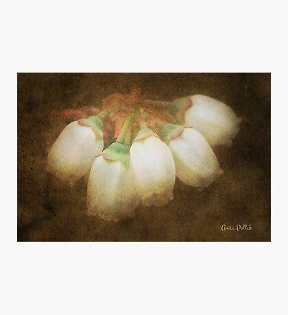 Antique Blueberry Flowers Photographic Print