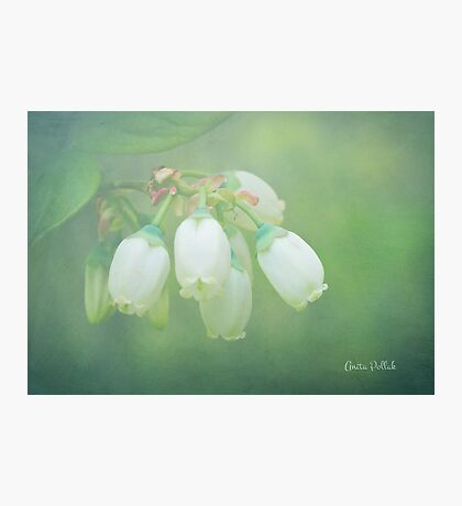 Misty Blueberry Flowers Photographic Print