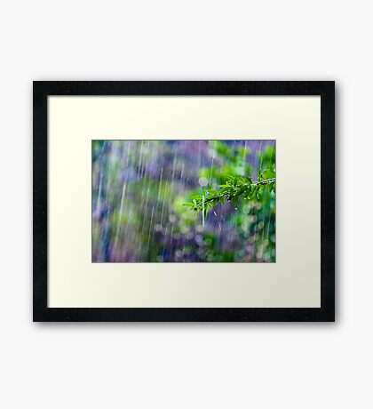 crazy rain Framed Print