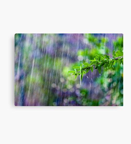 crazy rain Canvas Print