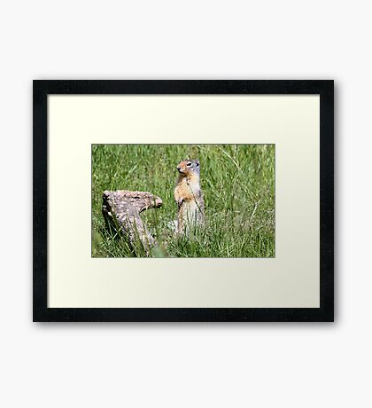 Watcha Doin? (Columbian Ground Squirrel) Framed Print