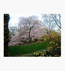 Central Park in Spring 3 Photographic Print