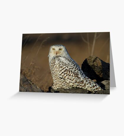 Snowy on the Rocks - Amherst Greeting Card