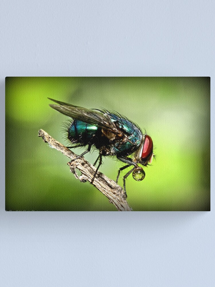 Alternate view of Fly Canvas Print