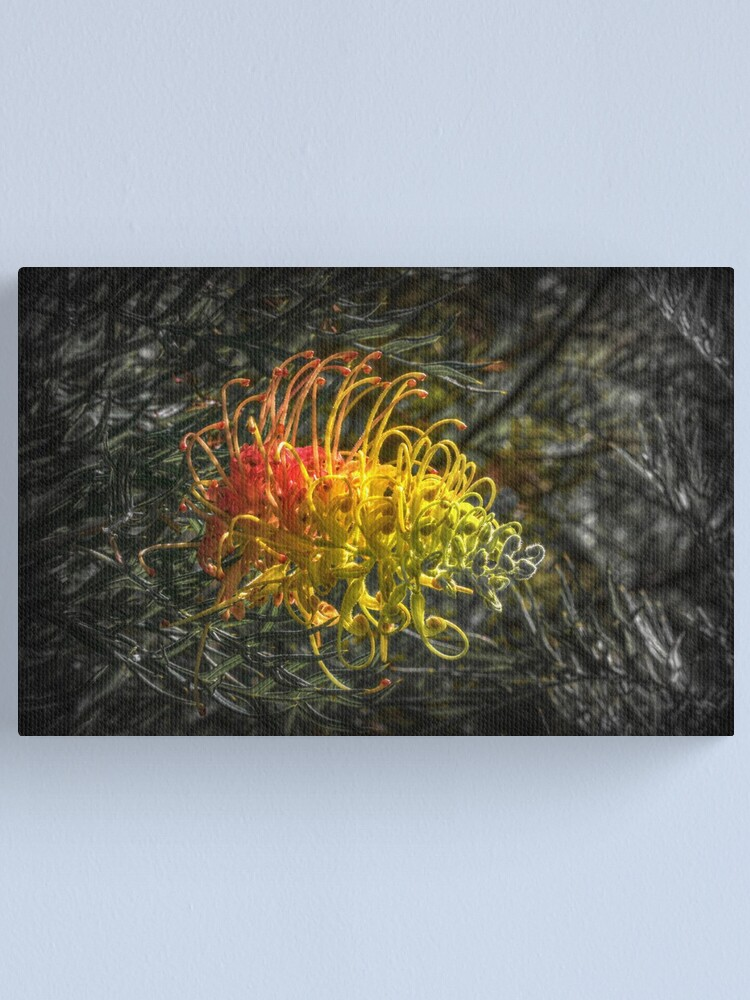 Alternate view of Grevillia flower Canvas Print