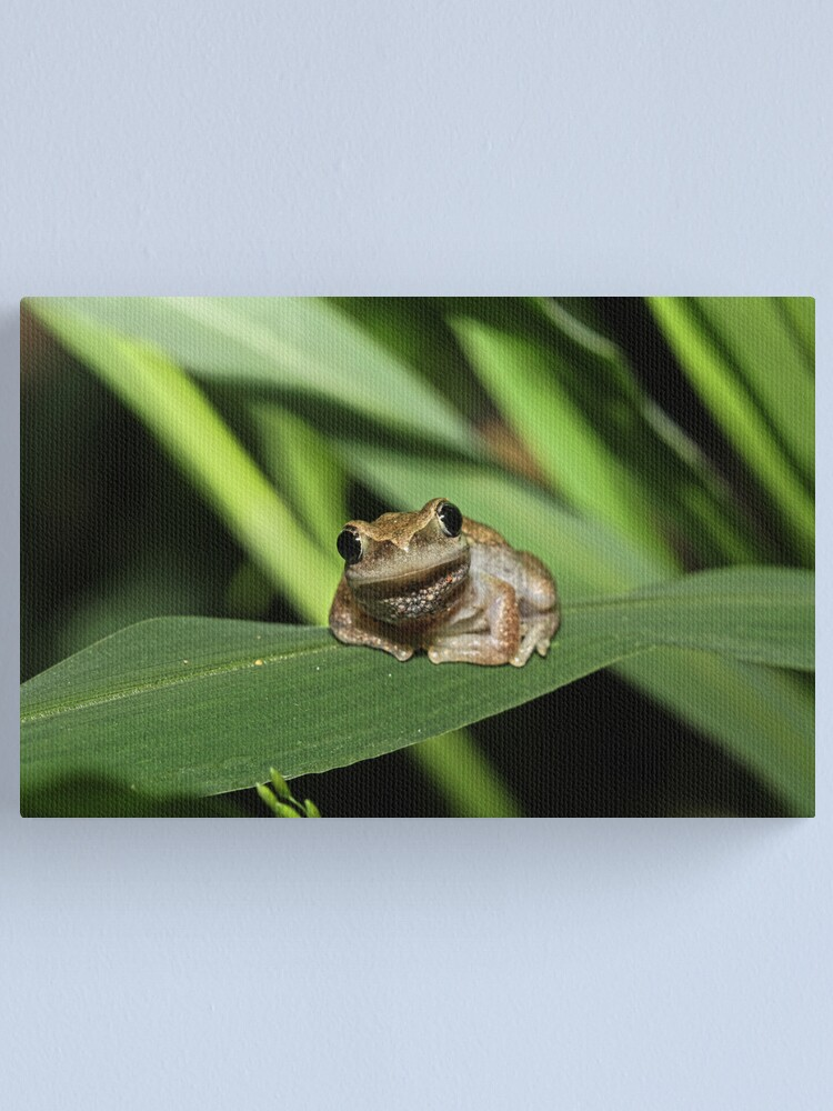 Alternate view of Hello Frog Canvas Print