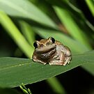 Hello Frog by Trevor Farrell
