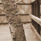 Footbridge by Paul Sparrow