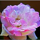 Pink Touch by Chet  King