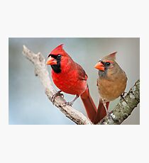 Mr. and Mrs. Cardinal Photographic Print