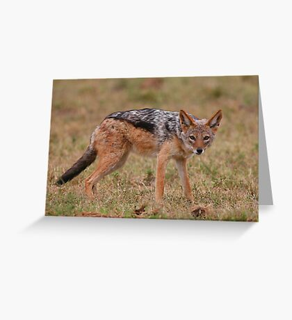 Caught In The Act / Black-Backed Jackal Greeting Card