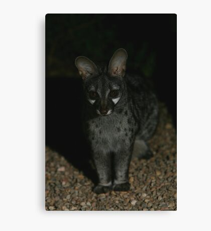 Small-spotted Genet Canvas Print
