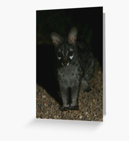 Small-spotted Genet Greeting Card