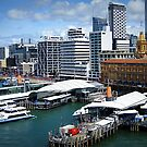 Auckland by Marcia Luly