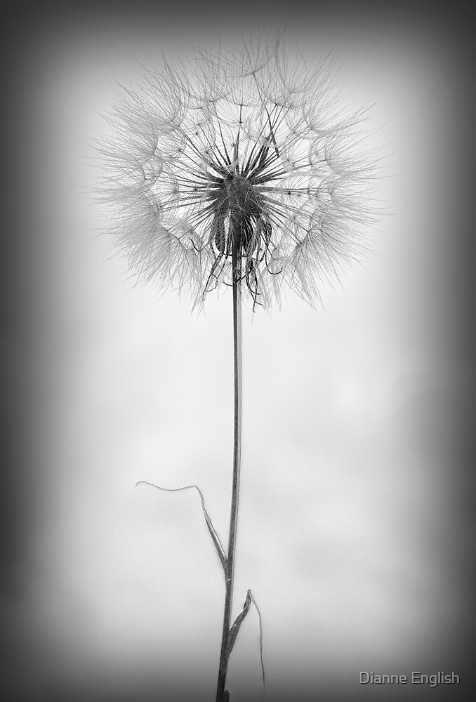 Dandelion Understated by Dianne English