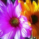 flower glow by deegarra