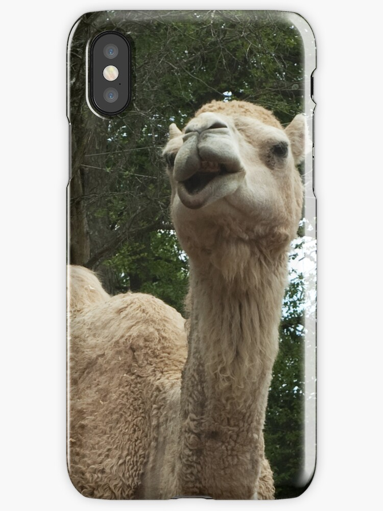 Laughing Camel by Barry Doherty