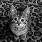 Curious Kitten B&W by Jessica Liatys
