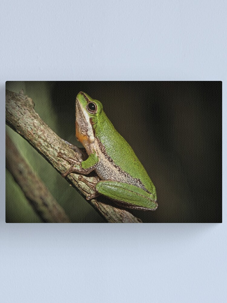Alternate view of Frog on Branch Canvas Print