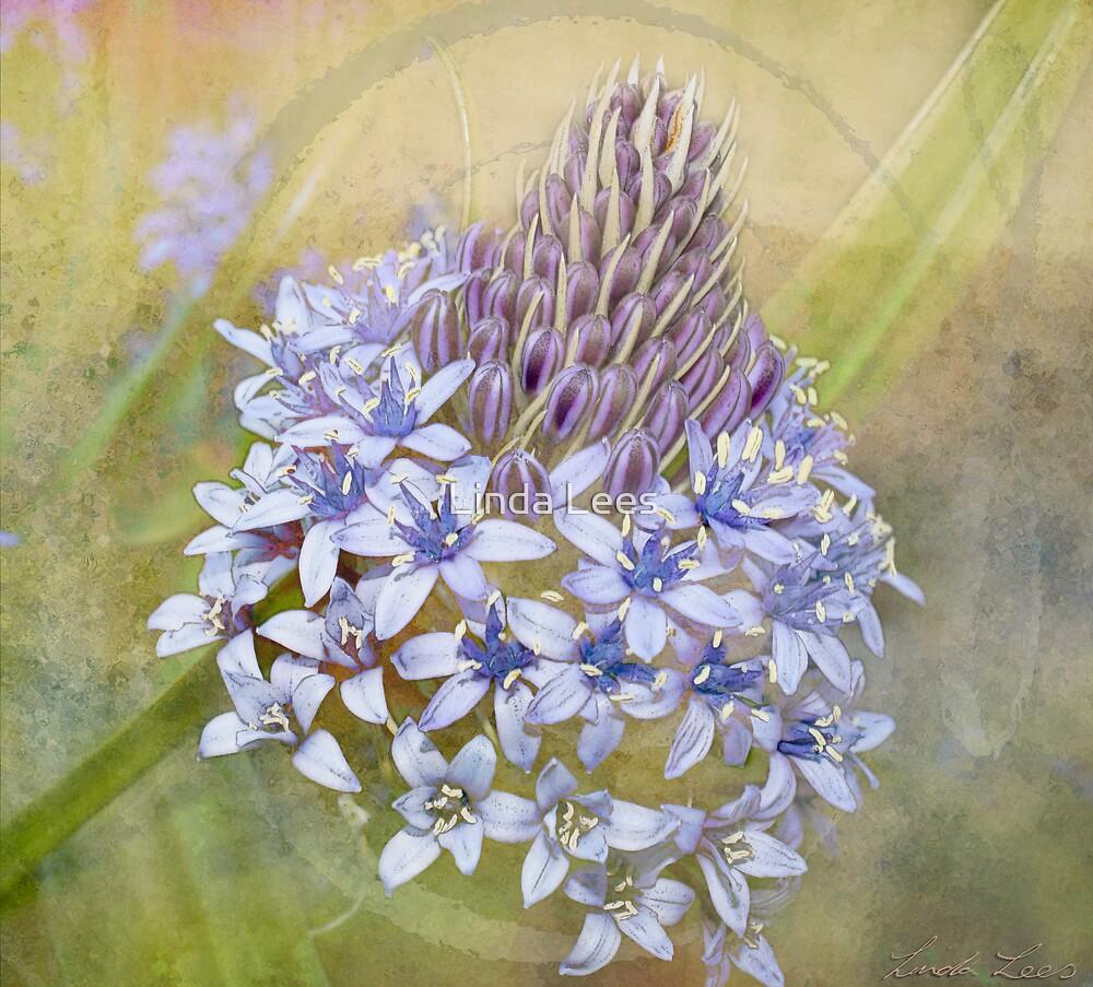 Peruvian Lily by Linda Lees