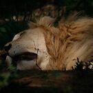 The King sleeps by David  Preston