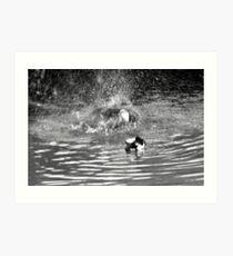 Splash Down Duck Art Print
