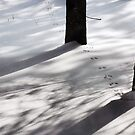 Tracks in the Snow by Debra Fedchin