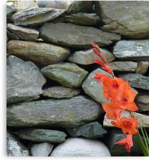 Stone Wall With Gladioli by Fara