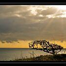 Lone tree by Ben  Warren