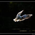 Lowkey Gull by Ben  Warren