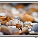 Shell amongst stones by Ben  Warren