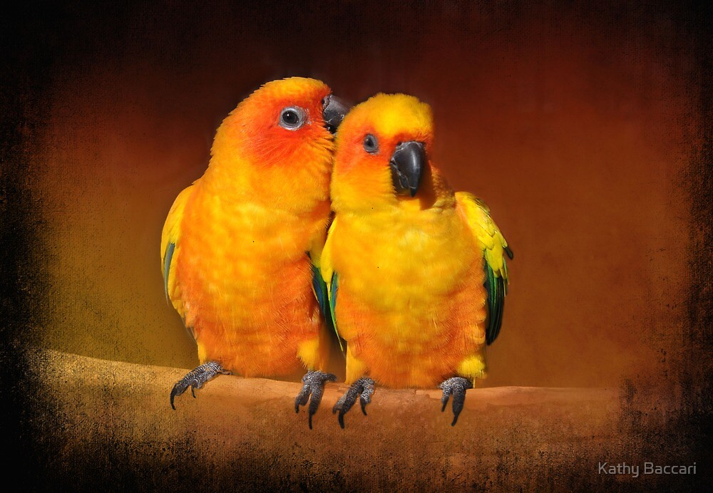 Oh That Feels Sooooooo Good...Sun Conures by Kathy Baccari