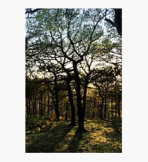 Tree People, Shire Hill, Glossop Photographic Print