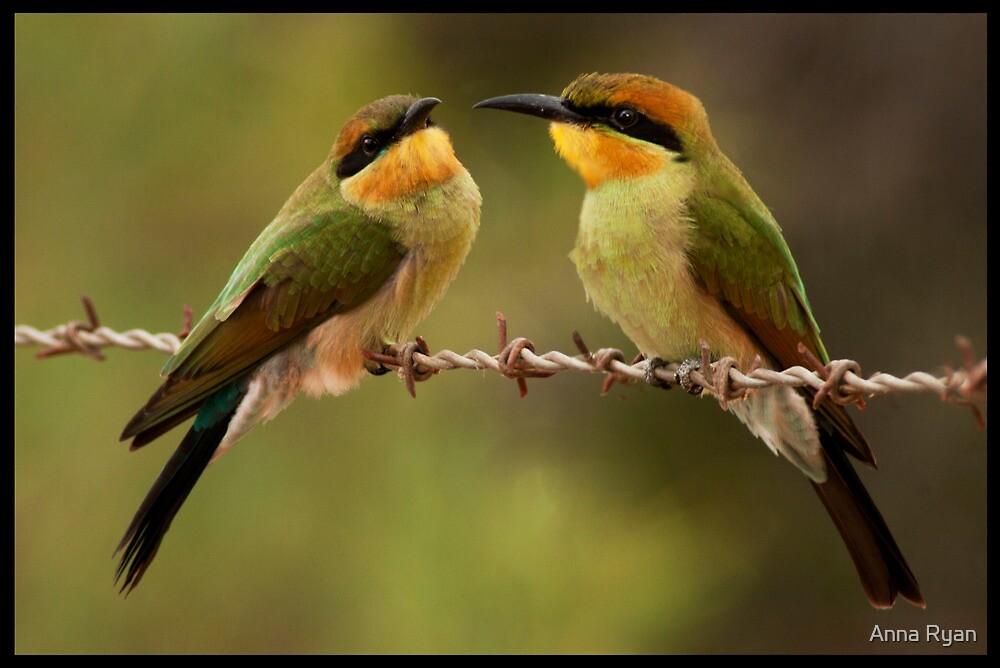 Rainbow Bee-Eaters by Anna Ryan