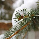 Snow pine by co0kiem0nster
