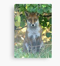 I spy a fox Canvas Print