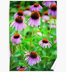 Bright Echinacea Poster