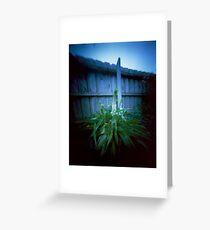 Backyard plant - pinhole Greeting Card